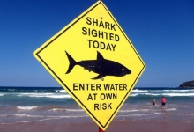 Swimmers walk into the surf next to a sign declaring a shark sighting on Sydney's Manly Beach, Australia, November 24, 2015. REUTERS/David Gray/Files