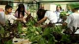 Hydroponics bring low-cost solution to high food prices