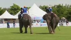 Elephants 'lovin' polo tournament
