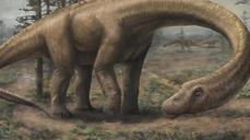 Massive dinosaur 'Dreadnoughtus' discovered in Argentina