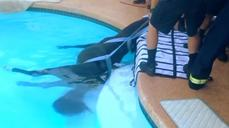 Horse rescued from swimming pool