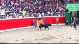 ペルーの牛追い祭り、3人が病院送りに(字幕・27日)