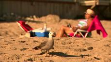 'Billionaire's Beach' opened to public
