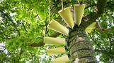 Designers build spiral staircase to the treetops