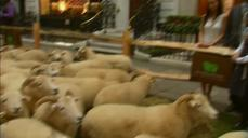 Flocks of sheep take over London's Savile Row