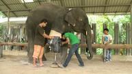 Mosha the elephant gets her new leg