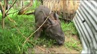 India floods force rhinos, wildlife to seek dry land