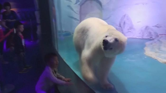 Activists: Free the 'world's saddest polar bear'