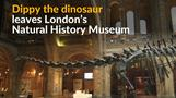 London bids farewell to Dippy the dinosaur