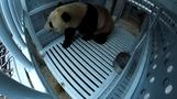 National Zoo to say bye-bye to Bao Bao
