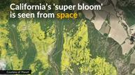 California's 'super bloom' in full view from space