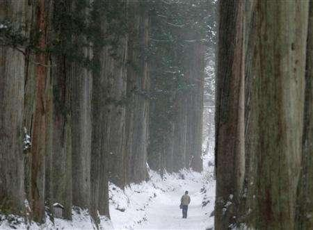 A man is dwarfed by cypress trees as he walks through a snowy path leading to the Togakushi shrine in Nagano, Japan, December 4, 2006. At least 70 percent of all new drugs introduced in the United States in the past 25 years come from nature despite the use of sophisticated techniques to design products in the lab, researchers reported on Monday. REUTERS/Yuriko Nakao