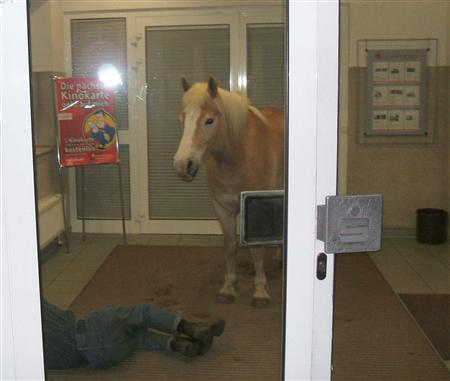 A horse stands next to a man sleeping on the floor of an all-night cash machine area in the foyer of a bank in Wiesenburg, in this handout photo released by police April 25, 2007. REUTERS/Handout