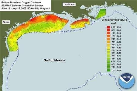 The Gulf of Mexico's ''dead zone'', a swath of water with such low levels of oxygen that marine life can be threatened or killed, is shown in this NOAA graphic from 2002. The Gulf of Mexico's ''dead zone'' could be the largest in 2007 since measurements began in 1985, scientists said on July 17, 2007. The dead zone, which recurs each year off the Texas and Louisiana coasts, could stretch to more than 8,500 square miles (22,100 sq km) this year -- about the size of New Jersey -- compared with 6,662 square miles (17,250 sq km) in 2006 and nearly double the annual average since 1990 of 4,800 square miles (12,430 sq km). REUTERS/NOAA/Handout