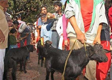 Nepali Hindus lead goats to the Bhadrakali templeto offer as sacrifice while observing the Dasain festival in Kathmandu, Nepal October 11, 2005. Officials at Nepal's state-run airline have sacrificed two goats to appease Akash Bhairab, the Hindu sky god, following technical problems with one of its Boeing 757 aircraft, the carrier said on Tuesday. REUTERS/Gopal Chitrakar