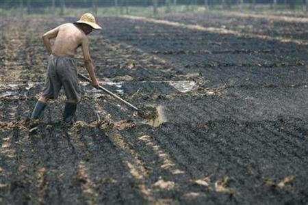 A farmer works at a field where crop stubbles were burned, on the outskirts of Shijiazhuang, northern China's Hebei province June 15, 2007. Large-scale cultivation of transgenic crops is a necessity if India is to feed a growing population and use more of its farmland for industry and homes, a senior government official said on Monday. REUTERS/Pillar Lee