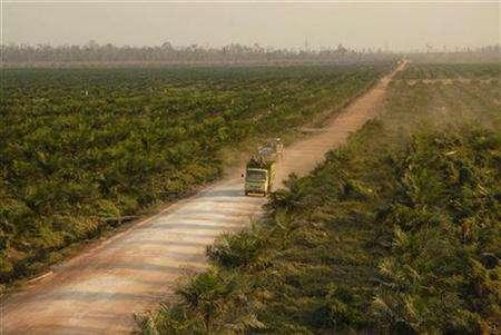A truck transports palm oil seedlings through a palm oil plantation at Kota Waringin Timur regency in Indonesia's Central Kalimantan province October 2, 2007. Greenpeace has blocked a tanker carrying more than 30,000 tonnes of palm oil from leaving an Indonesian port to protest against forest destruction blamed on plantations, the environmental group said on Thursday. REUTERS/Hardi Baktiantoro