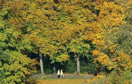 Berlin's Tiergarten central park in a file photo. Forests in the European Union are expanding surprisingly fast and could be enlisted to help the EU achieve goals for fighting climate change, researchers said on Thursday. REUTERS/Fabrizio Bensch