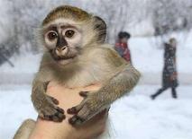<p>Una scimmia in una immagine di archivio. REUTERS/Ilya Naymushin</p>