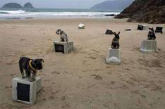 <p>Immagine di quattro cani in posa sopra quattro schermi di computer. REUTERS/Paul Yeung (HONG KONG)</p>