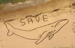 """<p>Alcuni attivisti formano la sagoma di una balena e l'invocazione """"Salvatele"""" sulla Bondi Beach di Sydney. REUTERS/Icon Images/Spectral Q/Handout (AUSTRALIA)</p>"""