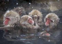 <p>Scimmie giapponesi fanno il bagno in una fonte calda nel Giappone centrale. REUTERS/Issei Kato (JAPAN)</p>