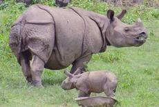<p>Un rhinocéros à une corne et son petit dans un zoo indien. La fin de l'insurrection maoïste au Népal est aussi une bonne nouvelle pour cette espèce menacée d'extinction pendant les dix années de guerre civile et qui sont aujourd'hui de plus en plus nombreux dans le royaume himalayen. /Photo d'archives/REUTERS/Utpal Baruah</p>