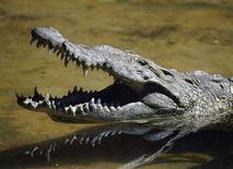 <p>Un coccodrillo in uno zoo. REUTERS/Oswaldo Rivas (NICARAGUA)</p>
