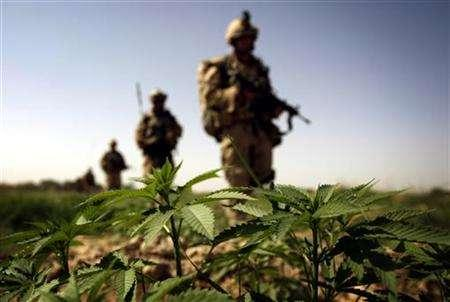 Canadian soldiers of India company from the NATO-led coalition force walk past marijuana plants after a firefight against Taliban insurgents near Sangsar, Zhari district in southeastern Afghanistan, July 3, 2007. REUTERS/Finbarr O'Reilly