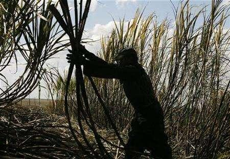 A worker cuts sugar cane in Pradopolis, 300 kms (186 miles) northwest of Sao Paulo July 6, 2007. REUTERS/Rickey Rogers