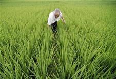 <p>Un contadino lavora nei campi nei dintorni di Baokang, provincia dell'Hubei. REUTERS/Stringer (CHINA)</p>