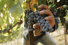 <p>Dans le vignoble de Pinheiro da Cruz, dans le sud du Portugal, les vignerons sont des prisonniers, parfois condamnés à de longues peines, qui vont et viennent librement et ont même droit de temps à autre à un verre de leur vin d'excellente qualité. /Photo d'archives/REUTERS/Robert Galbraith</p>