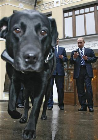 Russian Prime Minister Vladimir Putin watches his dog Koni that wears a GPS device on its collar in the Novo-Ogaryovo residence outside Moscow, October 17, 2008. REUTERS/RIA Novosti/Pool