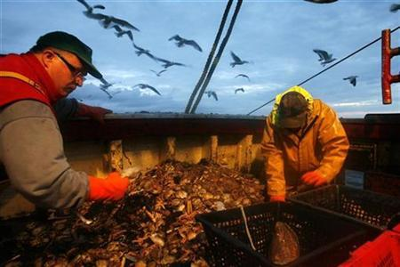 Fishermen sort through the early-morning catch aboard a trawler in the Atlantic Ocean off western France early May 28, 2008. REUTERS/Stephane Mahe