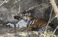<p>Un tigre descansa después del almuerzo en el zoológico Central en Katmandú, 24 dic 2008. Autoridades de Nepal dijeron el miércoles que los tigres del único zoológico del país han dejado de recibir alimento una vez por semana para evitar que sigan engordando. REUTERS/Gopal Chitrakar (NEPAL)</p>