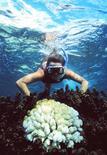 <p>Devenir le gardien de la petite île australienne d'Hamilton, sur la Grande Barrière de corail, relève pour beaucoup du rêve, au point que le site internet qui diffuse cette offre d'emploi a reçu tellement de candidatures qu'il est tombé en panne. /Photo d'archives/REUTERS/Greenpeace/HO</p>