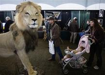 <p>People walk past a lion mount at the annual Dallas Safari Club Convention in Dallas, Texas January 10, 2009. REUTERS/Jessica Rinaldi</p>