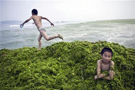A boy sits in a pile of algae as his friend runs at a beach in Qingdao, Shandong province in this July 6, 2008 file photo. REUTERS/Nir Elias/Files