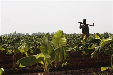 A farmer walks along a field on the outskirts of Havana in this July 18, 2008 file photo. Cuba has approved 45,500 land grants in the largest land redistribution since the 1960s, the Communist party Granma newspaper reported on Monday, as the country turns to the private sector to increase food production. REUTERS/Enrique De La Osa