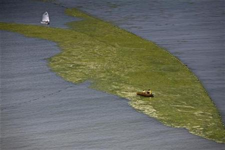 Boats are seen with a patch of algae just off a beach in Qingdao, Shandong province July 7, 2008. REUTERS/Nir Elias