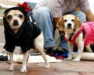 <p>Immagine d'archivio di due cagnolini a una mostra canina. REUTERS</p>