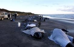<p>Australia, almeno 200 balene spiaggiate in Tasmania. REUTERS/NARACOOPA HOLIDAY UNITS/Handout</p>