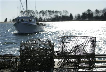 Old crab traps, brought up the Great Wicomico River in Virginia, rest on the transom of a deadrise boat, February 24, 2009. REUTERS/Gary Cameron