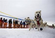 <p>Bruce Linton's team races out of the chute during the official restart of the Iditarod Race in Willow Alaska March 8, 2009. REUTERS/Nathaniel Wilder</p>