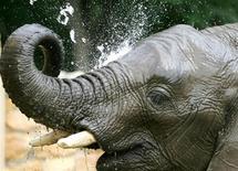 """<p>Imagen de archivo del elefante llamado Lotek del zoológico de Varovia en polonia, 21 jul 2004. Un político polaco criticó a su zoológico local por adquirir un elefante """"gay"""" llamado Ninio que prefiere a compañeros machos y probablemente no procreará, reportaron el viernes medios locales. REUTERS/Peter Andrews</p>"""