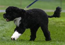 <p>U.S. President Barack Obama's new pet dog Bo, a six-month old male Portuguese water dog, runs on the South Lawn at the White House in Washington April 14, 2009. REUTERS/Jim Young</p>