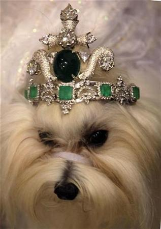 A male Maltese dog, Kanune, wears an emerald tiara worth 150 million baht ($4.2 million) during a dog fashion show in Bangkok April 23, 2009. The tiara consists of 153 karats of emeralds built with a titanium body and decorated with more than 100 karats of diamonds. REUTERS/Sukree Sukplang