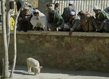 <p>Afghans look at a domestic pig at Kabul's zoo during the Eid Al-Fitr festival, December 6, 2002. REUTERS/Radu Sigheti</p>