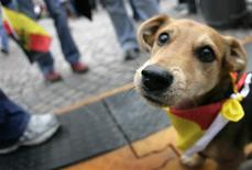 "<p>Puppy ""Duje"" wears a bandana in German national flag colours as he attends the reception for the German women's national soccer team in Frankfurt, in this October 1, 2007 file photo. REUTERS/Kai Pfaffenbach/Files</p>"