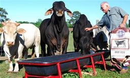 <p>Farmer Benny Pinckard feeds four Brahman bulls on his land in Troy, Alabama, April 24, 2009. REUTERS/Matthew Bigg</p>